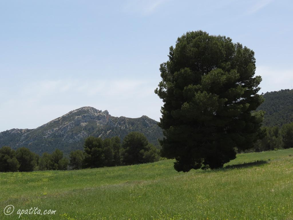 Vista del Maigmó desde Planisses